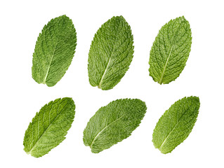 Six mint leaves set isolated on white background
