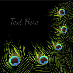 vector peacock on black background.vector illustration