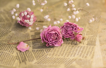 Dry roses on the old paper