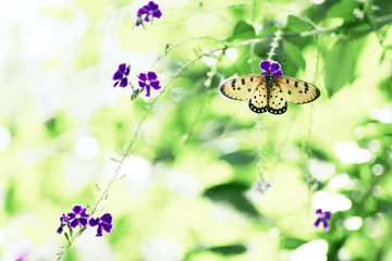 Beautiful nature background Butterfly on violet flower, soft foc