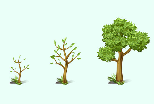 tree, vector, green, growing, small, large, leaf, nature, shrub, stone, grass, decor, garden