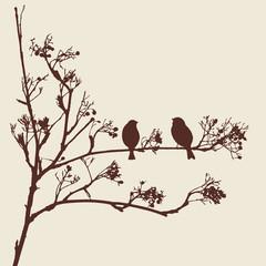 sparrows on a twig