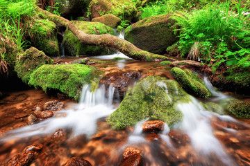 Stream gently cascading down a mountain forest