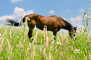 horse in green field,blurred background