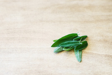 Fresh Sage Leaves on the Wooden Background