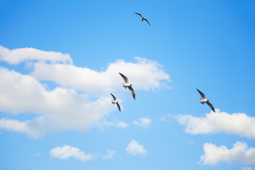 Wall Mural - Seagulls flying in the sky among the clouds