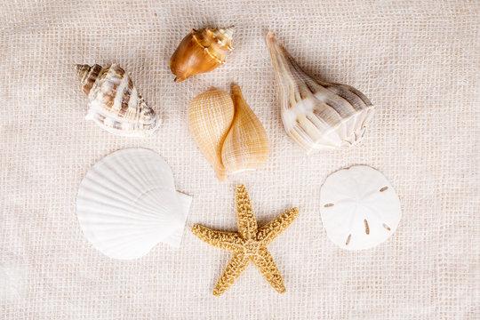 Birds Eye View of Seashells Over Textured White Background