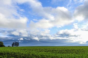 北海道長沼町の畑と空