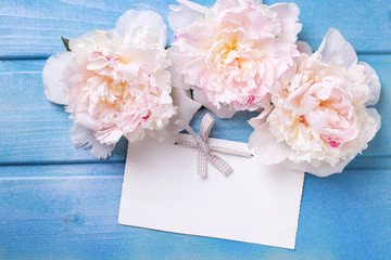 Splendid white peonies  flowers  and empty tag
