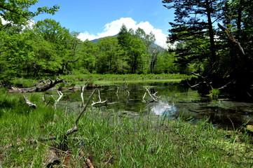 栃木県 日光国立公園 戦場ヶ原の泉門池