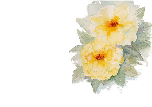 yellow roses watercolor illustration
