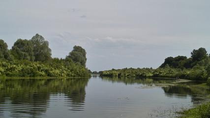 River in green bush