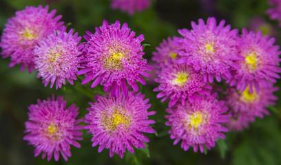 Fresh flowers closeup
