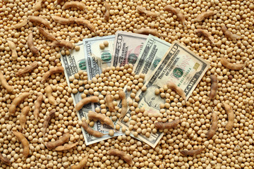 Agricultural concept, soybean and dollar money