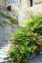 Serralunga d'Alba, castle detail. Color image