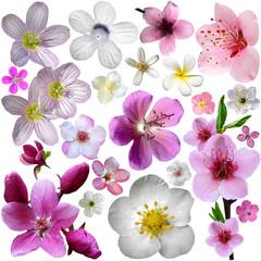 Flowers of blooming garden