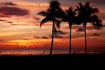 Tropical Sun Fire