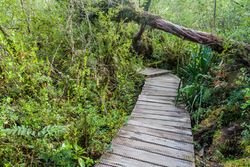 Boardwalk in a forest in National Park Chiloe