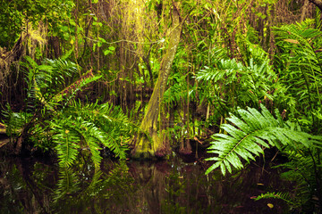 Wild tropical forest landscape with green plants