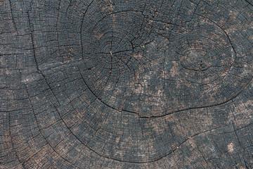 Wall Mural - Top view of tree rings