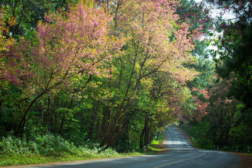 Blooming trees on road.