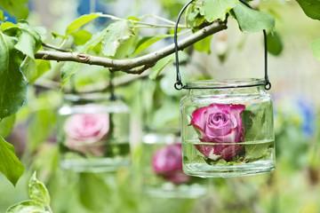Rose schwimmt im Glass im Garten