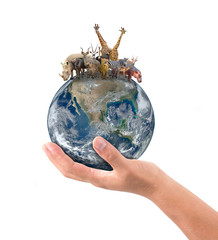 Wall Mural - hand hold animal on the earth