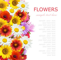 Aster, roses, sunflowers and camomile flowers background