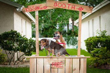 Beagle and Boxer dogs sitting in a kissing booth