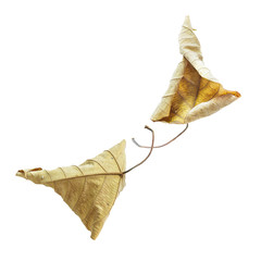 Dried autumn leaves isolated on white background