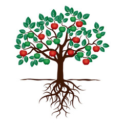Young Tree with Green Leafs, Roots and Red Apple. Vector Illustration