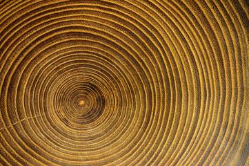 Crose up of tree rings