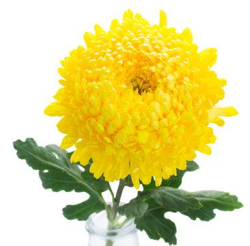 yellow mum flowers