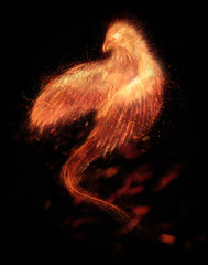 Burning bird phoenix  isolated