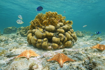 Starfish underwater reef fish and corals Mexico