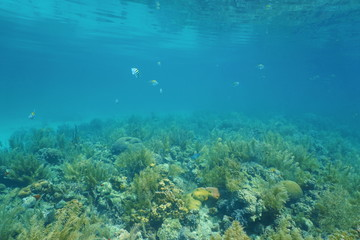 Underwater landscape coral reef and sea surface