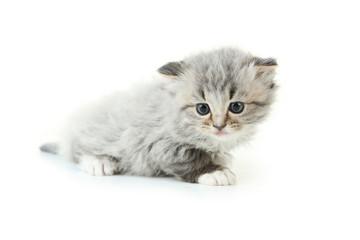 Small kitten isolated on white
