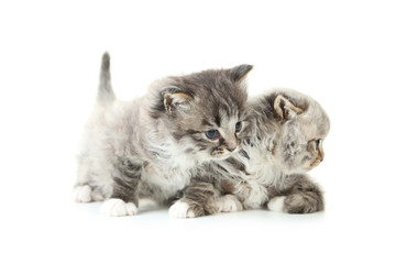 Small kittens isolated on white