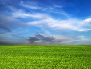 scene Green Field
