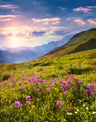Wall Mural - Blooming pink flowers in the Caucasian mountains