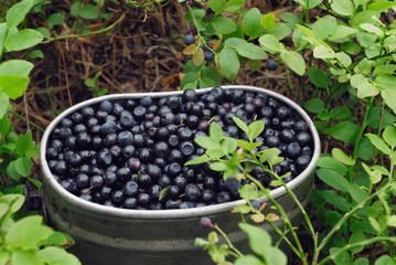 Blueberries in container