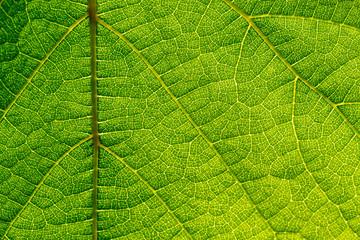Leaf-Structures