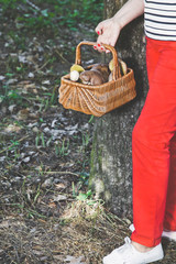 Happiness of mushroom picker. Basket with white porcini mushroom
