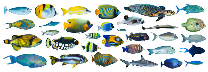 set of many colorful exotic fishes isolated on white background