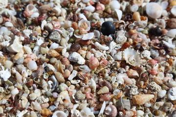 Muschelsand am Strand