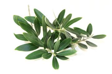 olive oil for spots