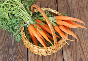 Fresh organic carrots in a basket, selective focus