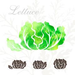 Lettuce icons set.
