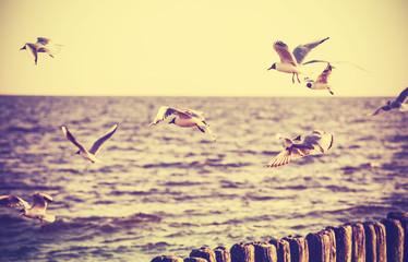 Vintage retro stylized photo of birds on the sea.