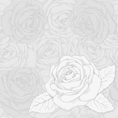 White rose on a gray seamless background